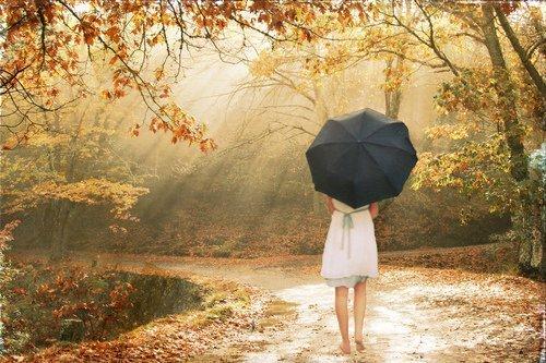 Fungsi payung