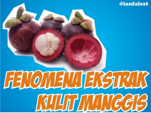 blog post Fenomena Ekstrak Kulit Manggis